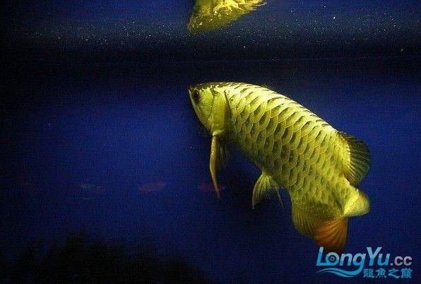 它们如此的美丽,如此迷人!(怕中毒者勿入) 西安观赏鱼信息 西安博特第26张