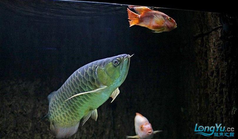 它们如此的美丽,如此迷人!(怕中毒者勿入) 西安观赏鱼信息 西安博特第25张