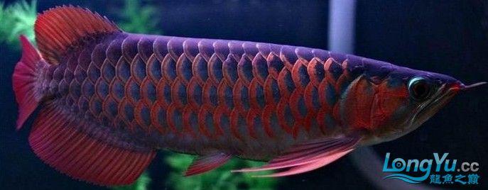 它们如此的美丽,如此迷人!(怕中毒者勿入) 西安观赏鱼信息 西安博特第29张