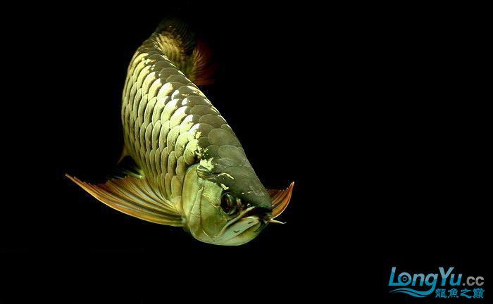 它们如此的美丽,如此迷人!(怕中毒者勿入) 西安观赏鱼信息 西安博特第30张