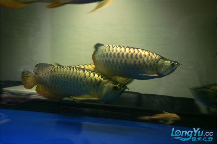 它们如此的美丽,如此迷人!(怕中毒者勿入) 西安观赏鱼信息 西安博特第27张