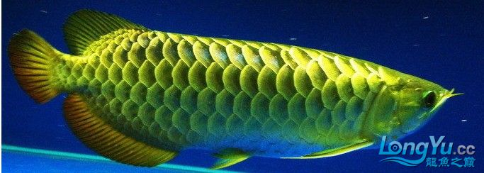 它们如此的美丽,如此迷人!(怕中毒者勿入) 西安观赏鱼信息 西安博特第36张