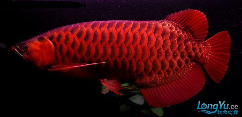 它们如此的美丽,如此迷人!(怕中毒者勿入) 西安观赏鱼信息 西安博特第32张
