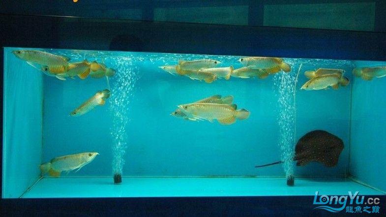 它们如此的美丽,如此迷人!(怕中毒者勿入) 西安观赏鱼信息 西安博特第34张