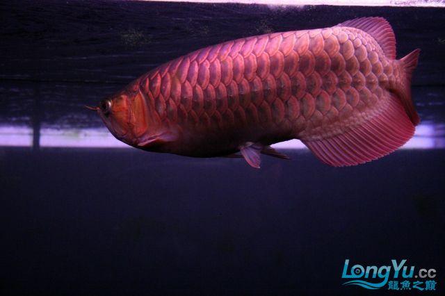 它们如此的美丽,如此迷人!(怕中毒者勿入) 西安观赏鱼信息 西安博特第33张