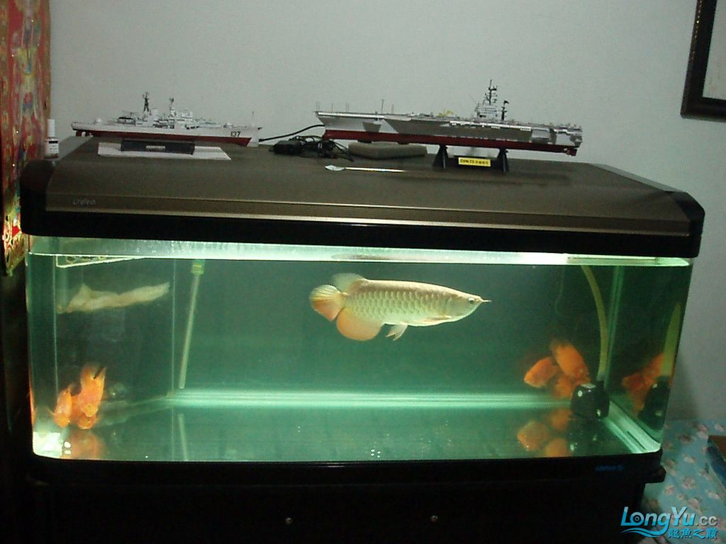 宝石近况以及新制作的鱼缸装饰品