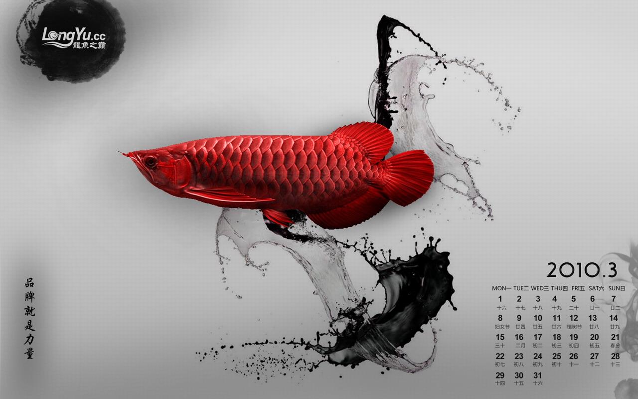 2010年3月份龙鱼、虎鱼、魟鱼壁纸下载-水墨风格【西安最大水族批发市场】