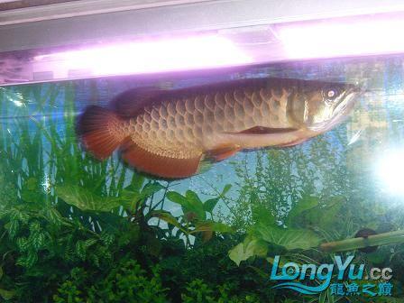 从星点到高背到过背 西安观赏鱼信息 西安博特第3张