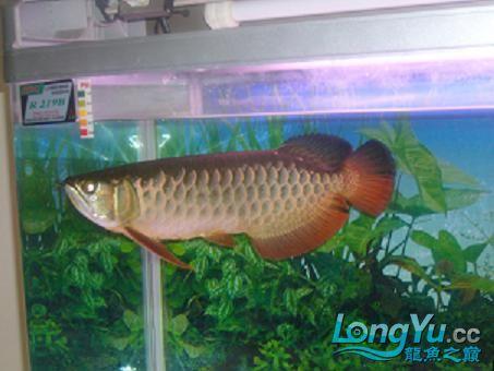 从星点到高背到过背 西安观赏鱼信息 西安博特第1张