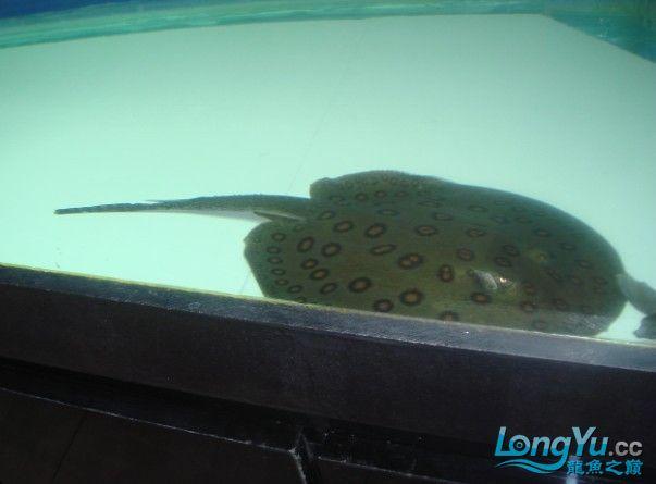 河北鱼友报道发发我的鱼 西安观赏鱼信息 西安博特第4张
