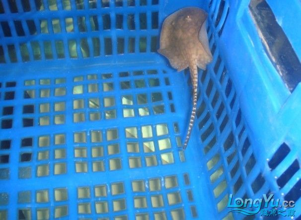 河北鱼友报道发发我的鱼 西安观赏鱼信息 西安博特第14张