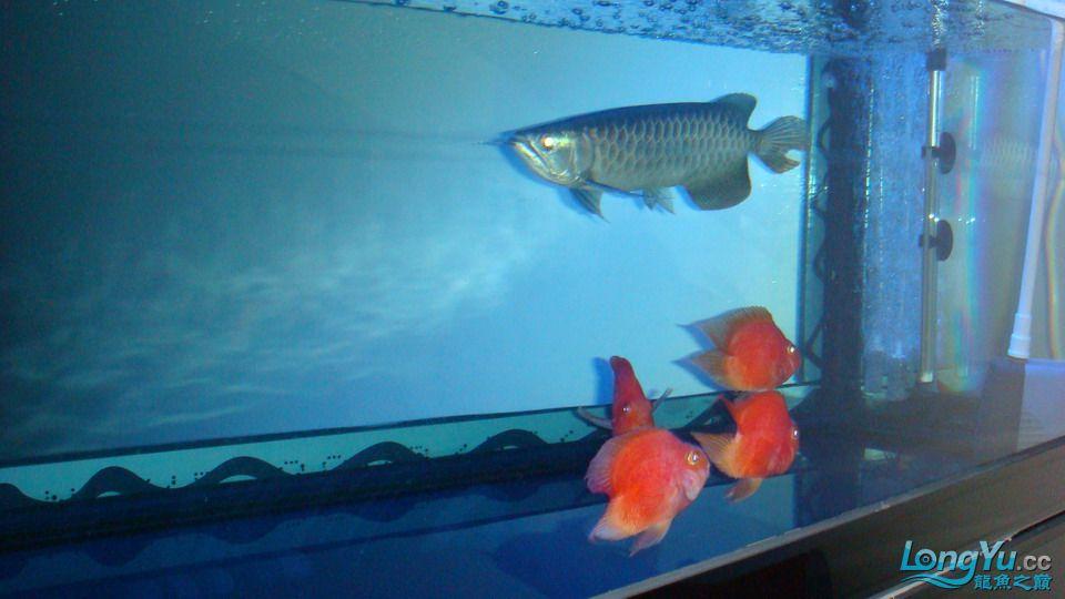 高背为何不吃食? 西安观赏鱼信息 西安博特第1张