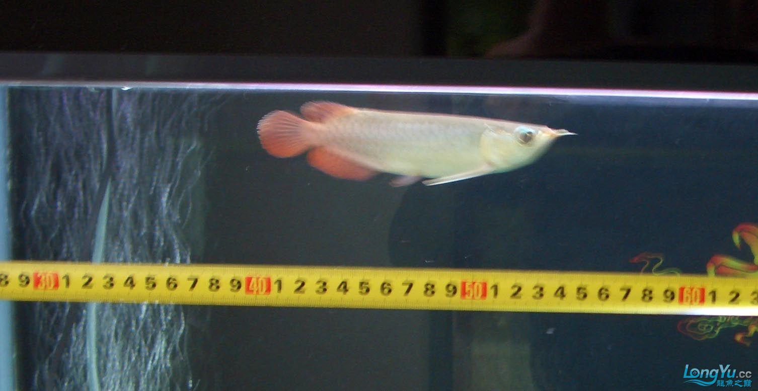 给15公分长须小超血建个档(5月7日更新——女皇大帆】23cm) 西安观赏鱼信息 西安博特第2张