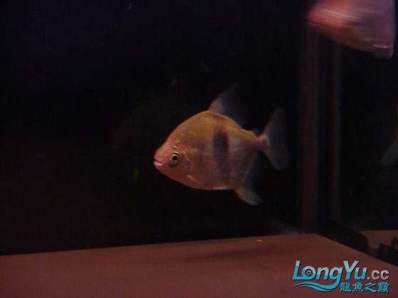 百龙图奖品 大家共同分享 西安观赏鱼信息 西安博特第1张