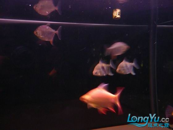 百龙图奖品 大家共同分享 西安观赏鱼信息 西安博特第7张