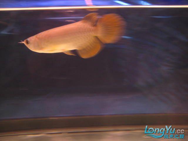 帮忙看看 西安观赏鱼信息 西安博特第4张