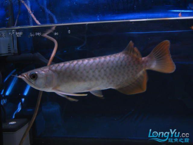 帮忙看看 西安观赏鱼信息 西安博特第3张