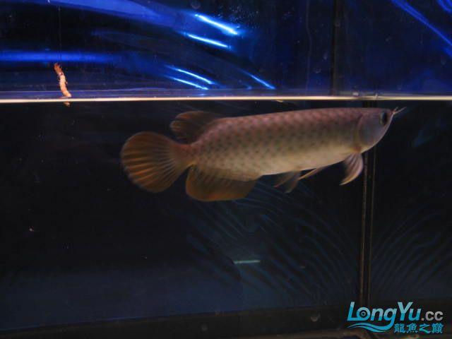 帮忙看看 西安观赏鱼信息 西安博特第5张