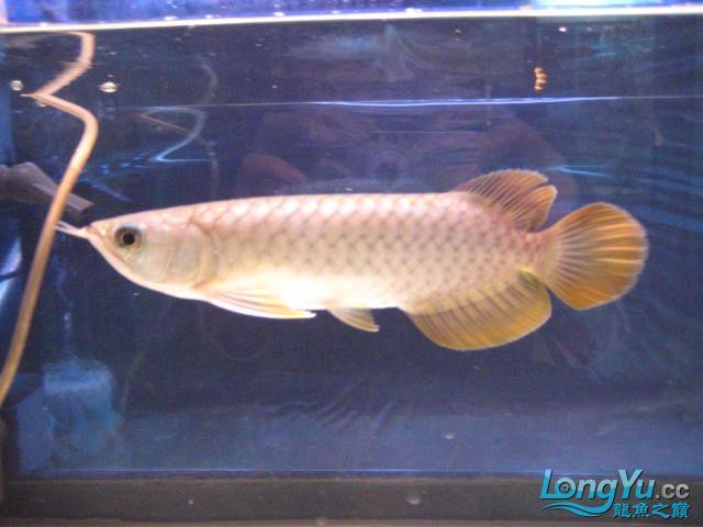 帮忙看看 西安观赏鱼信息 西安博特第6张