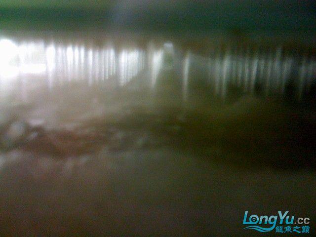 出水口问题的终结【西安黑帝王魟鱼】 西安观赏鱼信息 西安博特第7张