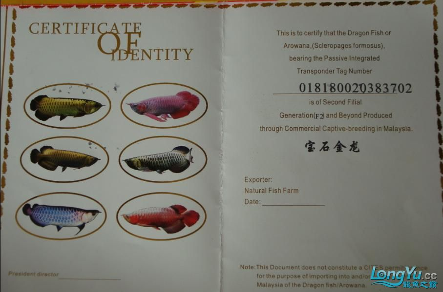 2010年1月4日买了条宝石,收到的证书是这样的(已附龙照片)
