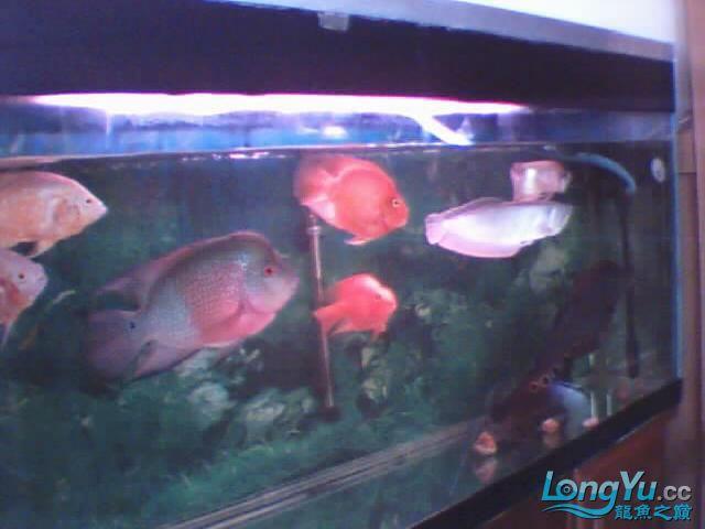 我【西安二手龙鱼】最喜爱的鹦鹉鱼! 西安观赏鱼信息 西安博特第7张