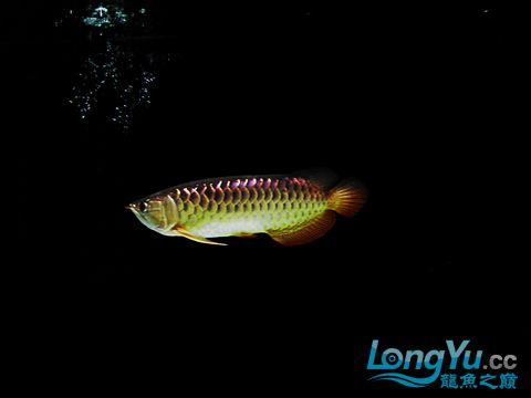 发几张今天新拍的照片 龙龙有了新伙伴了 哈哈【西安黄金鼠鱼】