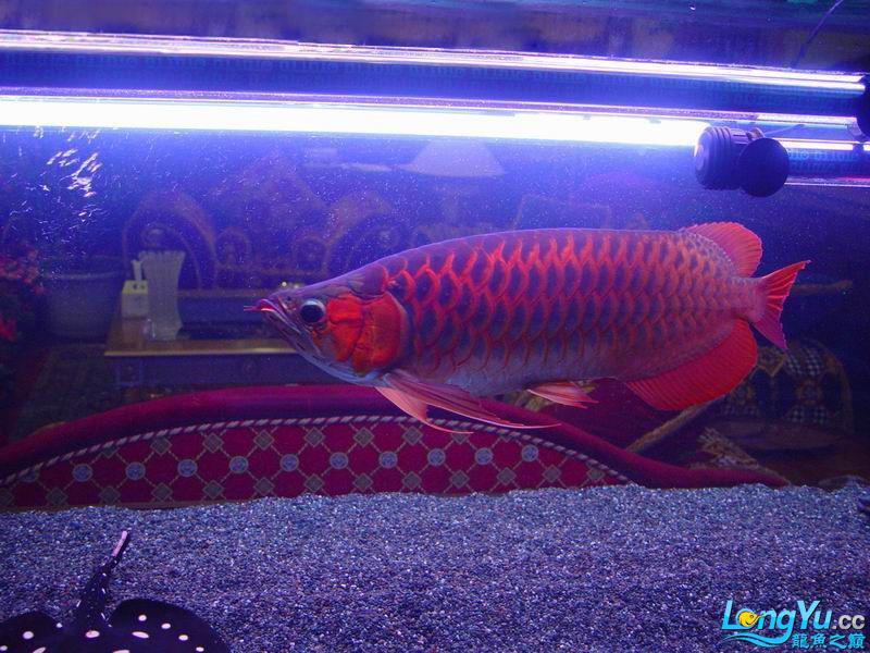【西安海水鱼】我的捣蛋部队-【百龙图】活动