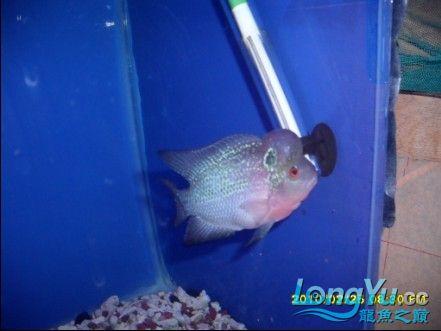 【西安鱼市场】我们福建的鱼比其它地方个鱼就是贵.JS见量!!!有同感的就顶起来