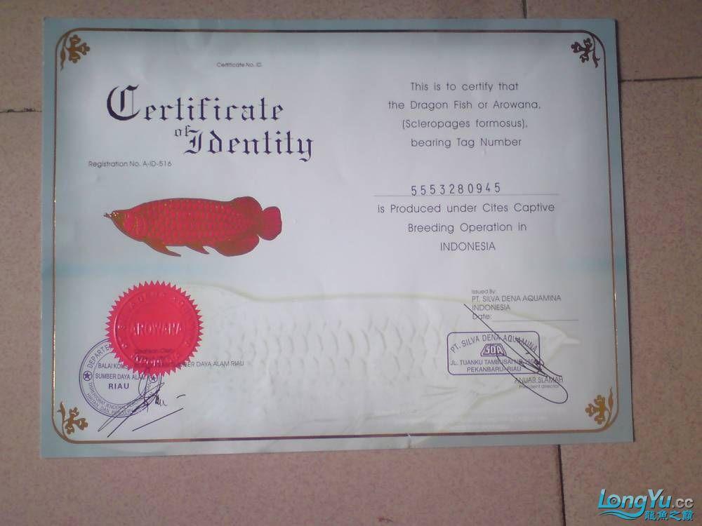证书是真的吗?