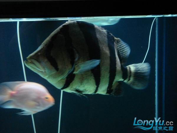 【西安博特代理】潜水一段时间拉,出来透透气,放毒拉,呵呵!