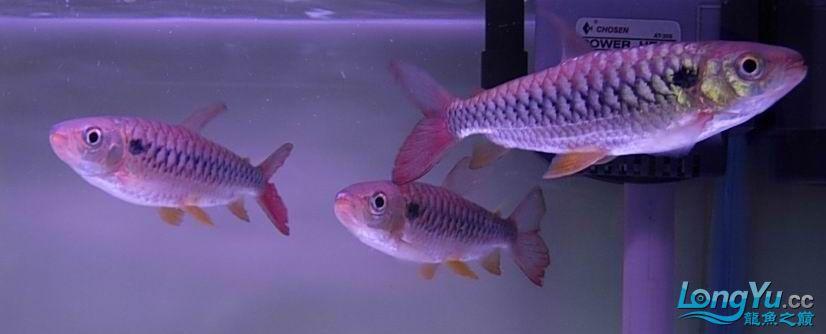 花地鱼商请【西安细线银板鱼批发】帮忙。。已解决,谢谢!