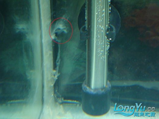 【西安哪个水族店有帝王三间鼠鱼】缸壁上有白色的絮状物