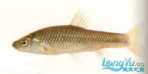 二十多年终于养到红龙级别,用心谈谈养鱼人生感悟!