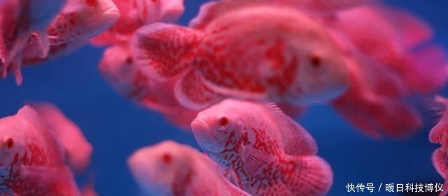 观赏鱼病如何能及时发现观察从这几个【西安泰虎】方面入手不妨一看