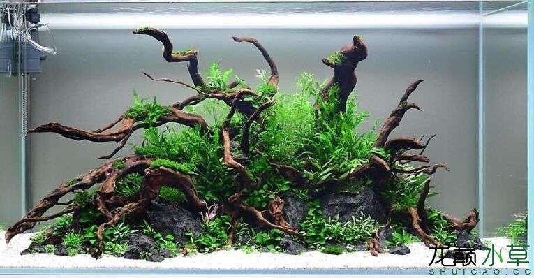 请教这种风格的草缸用的是什么砂? 西安龙鱼论坛 西安博特第2张
