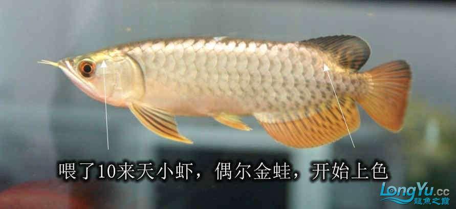 不知咋的掉一鳞心疼呀 西安观赏鱼信息 西安博特第3张