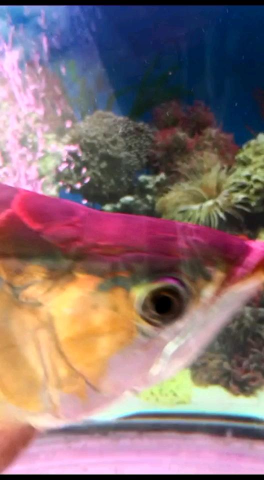 求助帮我看一下鱼鳞片怎么办