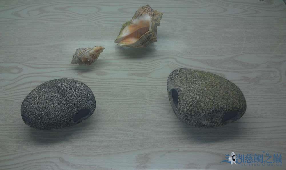 三湖慈鲷小试身手换水篇 西安观赏鱼信息 西安博特第2张