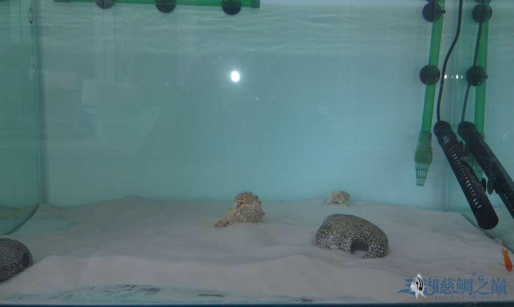 三湖慈鲷小试身手换水篇 西安观赏鱼信息 西安博特第10张