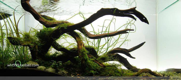 继续造景学习吧 西安观赏鱼信息 西安博特第1张