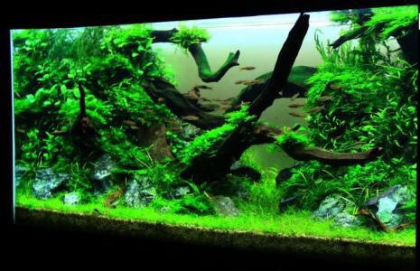 继续造景学习吧 西安观赏鱼信息 西安博特第3张