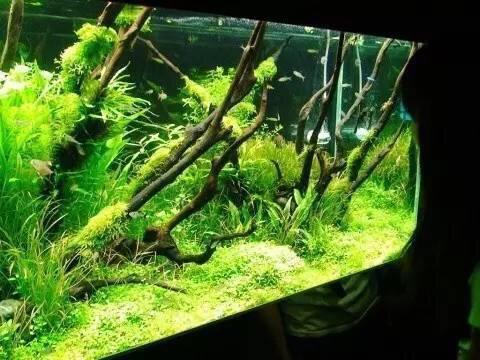 继续造景学习吧 西安观赏鱼信息 西安博特第5张