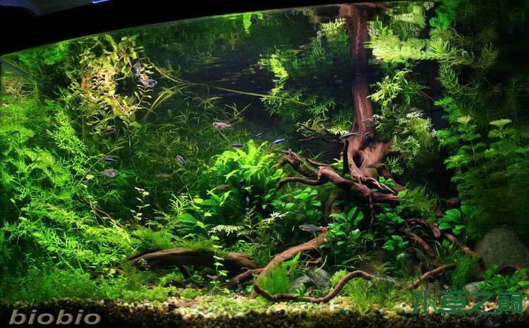 继续造景学习吧 西安观赏鱼信息 西安博特第6张
