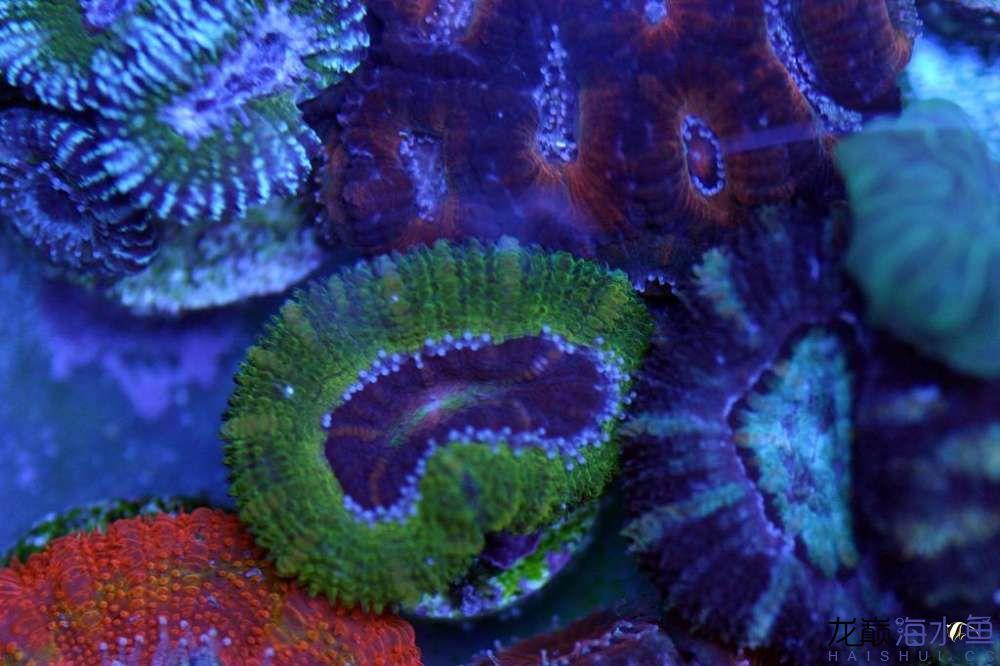 要细心【西安印尼红龙鱼价格】 西安观赏鱼信息 西安博特第1张