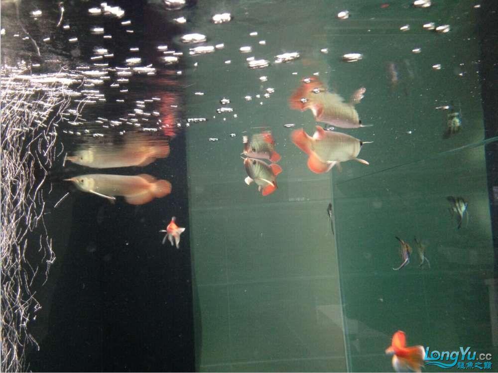 595555混养第一天 西安观赏鱼信息 西安博特第4张