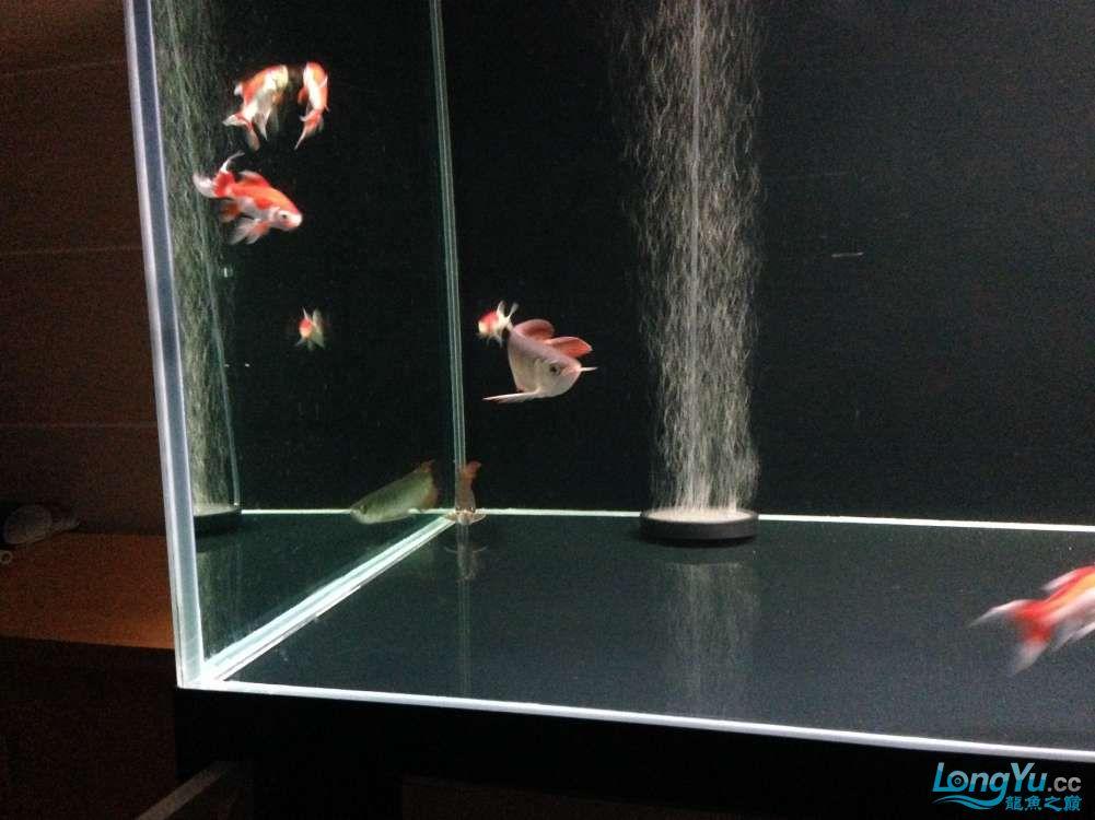 595555混养第一天 西安观赏鱼信息 西安博特第5张