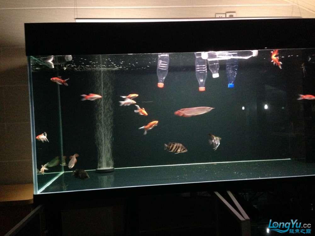 595555混养第一天 西安观赏鱼信息 西安博特第7张