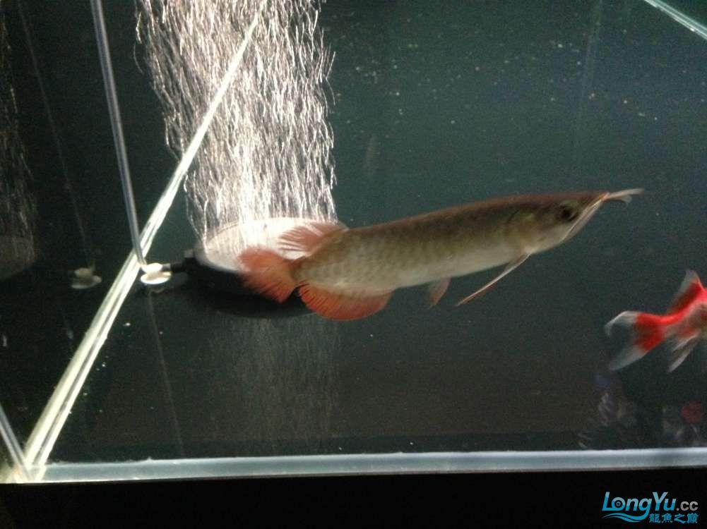 595555混养第一天 西安观赏鱼信息 西安博特第8张