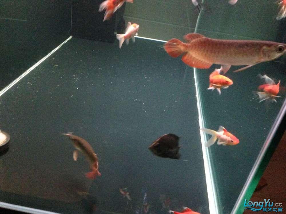 595555混养第一天 西安观赏鱼信息 西安博特第10张